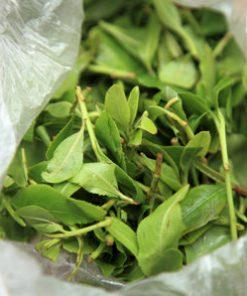 Buy Khat plant Online